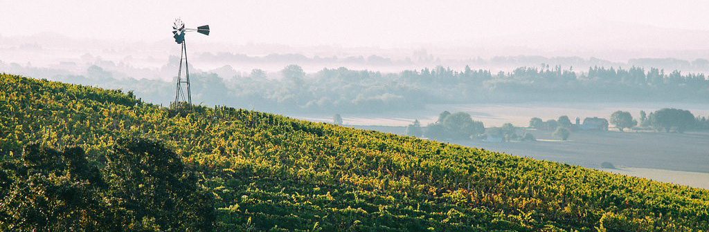 Visit Oregon's Wine Country for Thanksgiving • Yamhill Valley Vineyard